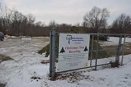 Free pine mulch available at 13 tree recycling sites