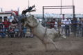 COURTESY PHOTO Belvidere Daily Republican Tuff Hedeman, one of the most recognizable cowboys in the history of rodeo will be at the Boone County Fair for the second stop on his Breakout Series Midwest Swing.