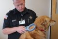COURTESY PHOTO Belvidere Daily Republican 	Officer Justin checks Foxy for an implanted microchip.