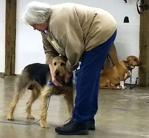 Quansa Training Center promotes responsible pet ownership