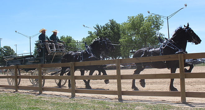 First Boone County Draft Horse Classic is a big success